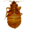 bedbugs control and cleaning